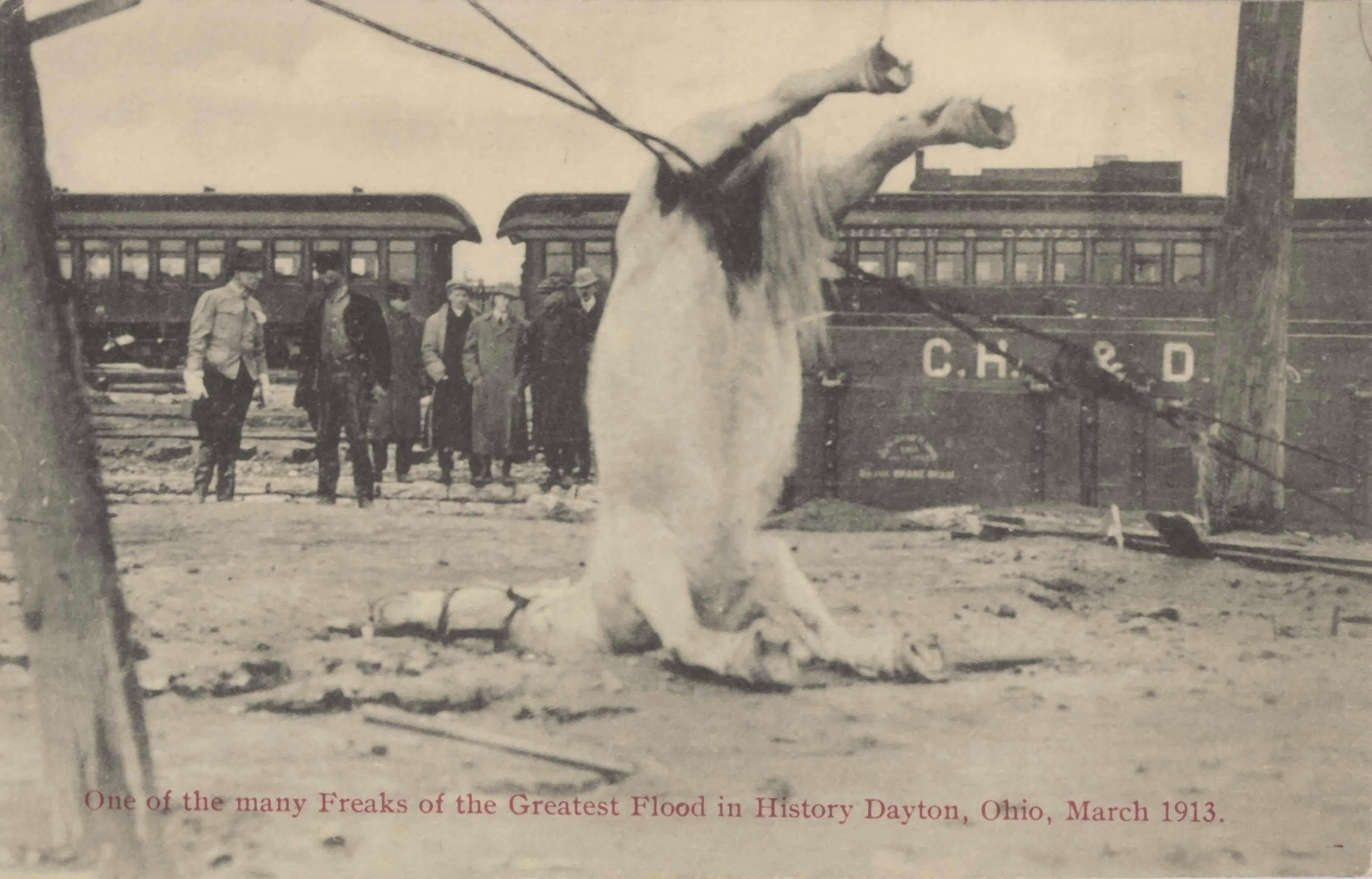 1913. Dayton, Ohio. Az árvíz után egy huzalon fennakadt ló teteme. Kb. 3000 ló fulladt meg azokban a napokban..jpg