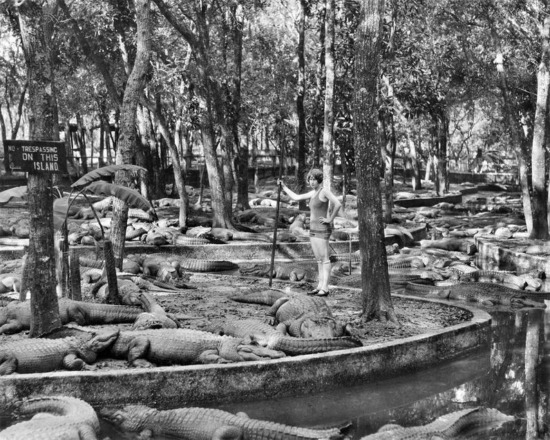 1926. Nyugis kis állás. Krokodilfarm, St. Augustine, Florida..JPG