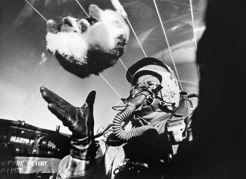 1958. Súlytalanság kísérlet macskával egy F94-C repülő fedélzetén..JPG
