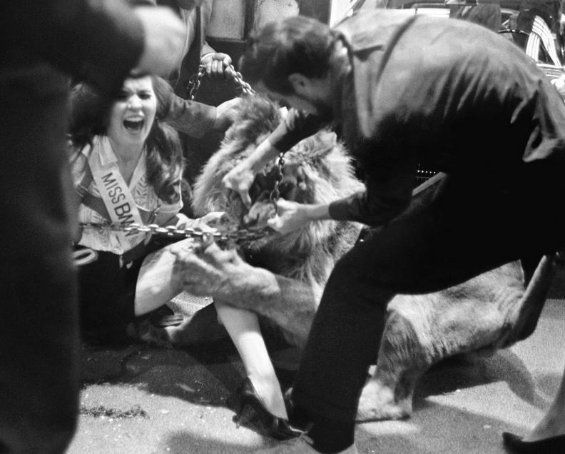 1966. Nell Theobald modellt a new yorki autószalon BMW standján fotózás közben egy oroszlán támadta meg. A hölgy lábát sikerült megmenteni és 250 ezer dolláros kártérítést is kapott..JPG