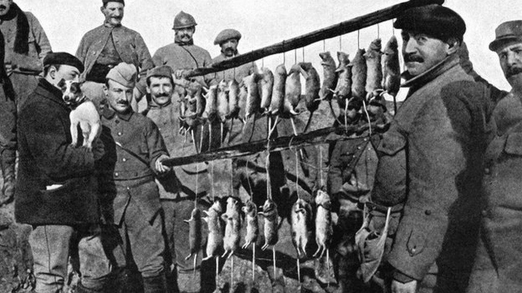 1916. Terrier és zsákmánya 15 perc vadászat után egy francia lövészárokban..jpg
