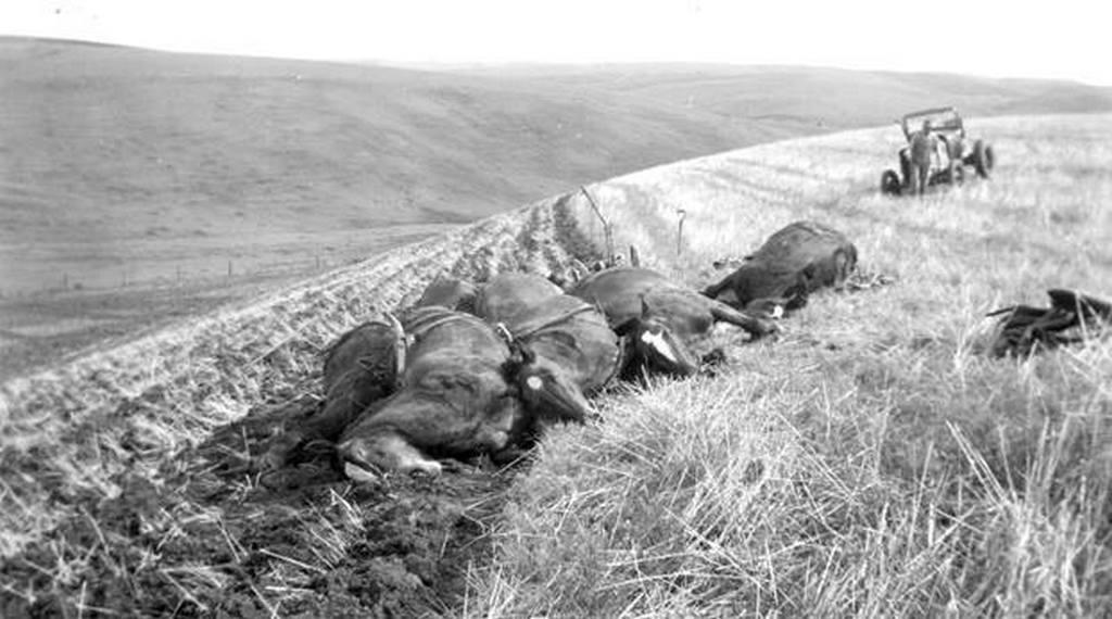 1940. Washington állam. Egy farmert és nyolc lovát vilámcsapás érte. Csak a férfi és egy ló élte túl..jpg