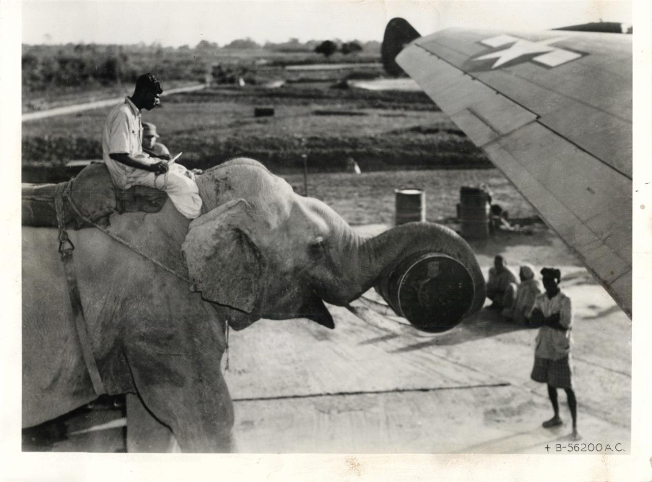 1940-es évek. Elefántokkal rakodnak be egy C-46-os teherszállítóba, valahol Délkelet-Ázsiában..jpg