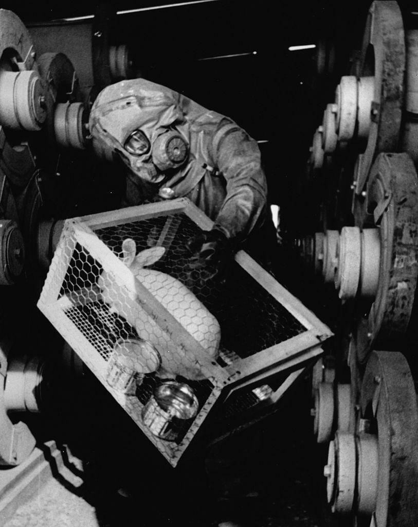 1970. USA. Szaringázt előállító üzemben nyulakat használnak az esetleges szivárgásokat tesztelendő..jpg