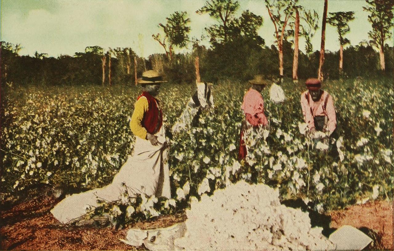 1880 körül. Feketék dolgoznak egy amerikai déli állambéli gyapotültetményen..jpg