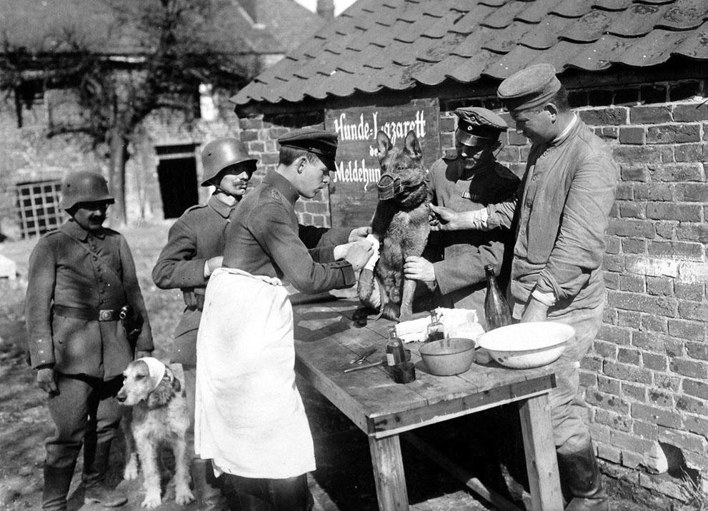 1918. Német felcser lát el egy sérült üzenethordó kutyát..jpg