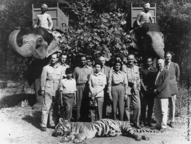 1961. II. Erzsébet (középen) Indiában férje, Fülöp herceg (bal szélen) által lőtt tigrissel..jpg