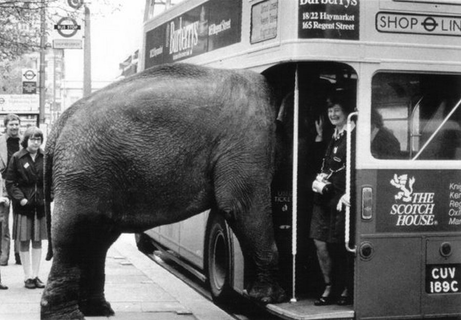 1970. Elefánt próbál buszra szállni a Regent streeten..jpg