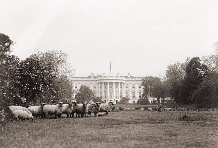 1918. Akkoriban még ők nyírták a Fehér Ház gyepét..jpg