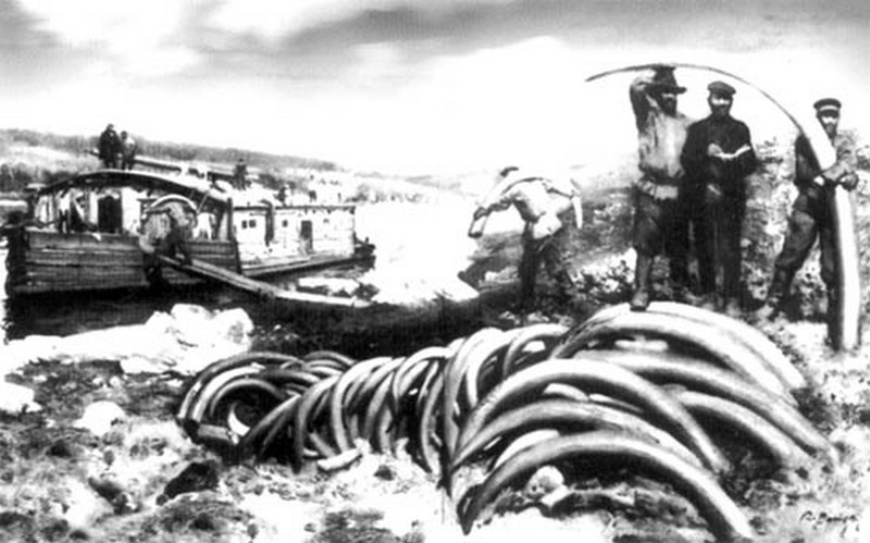 1900_jakutfold_mamut_agyarak_kereskedelme_.jpg