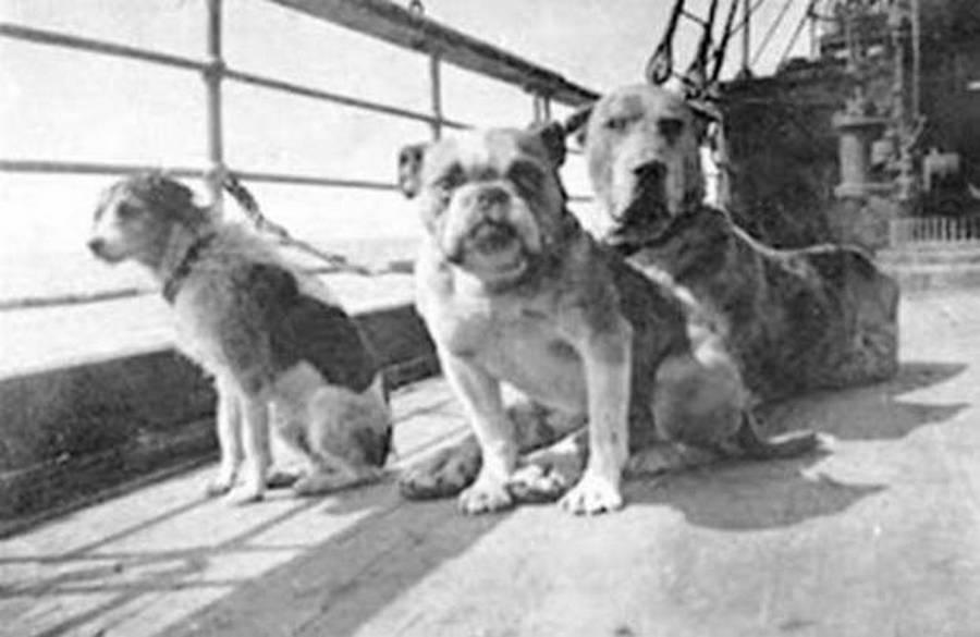 1912_a_titanicrol_megmenekult_harom_kutya.jpg