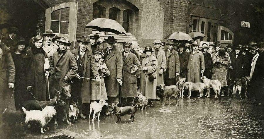1926_berlin_akik_nem_akartak_fizetni_az_emelt_ebadot_eljottek_kutyajukat_leadni_a_sintertelepen_ahol_kesobb_agyonvertek_oket_borzaszto_.jpg