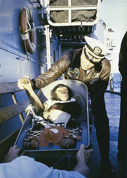 1961. Sonka, az űrhajós csimpánz üdvözli megmentőit a földet érés után..jpg