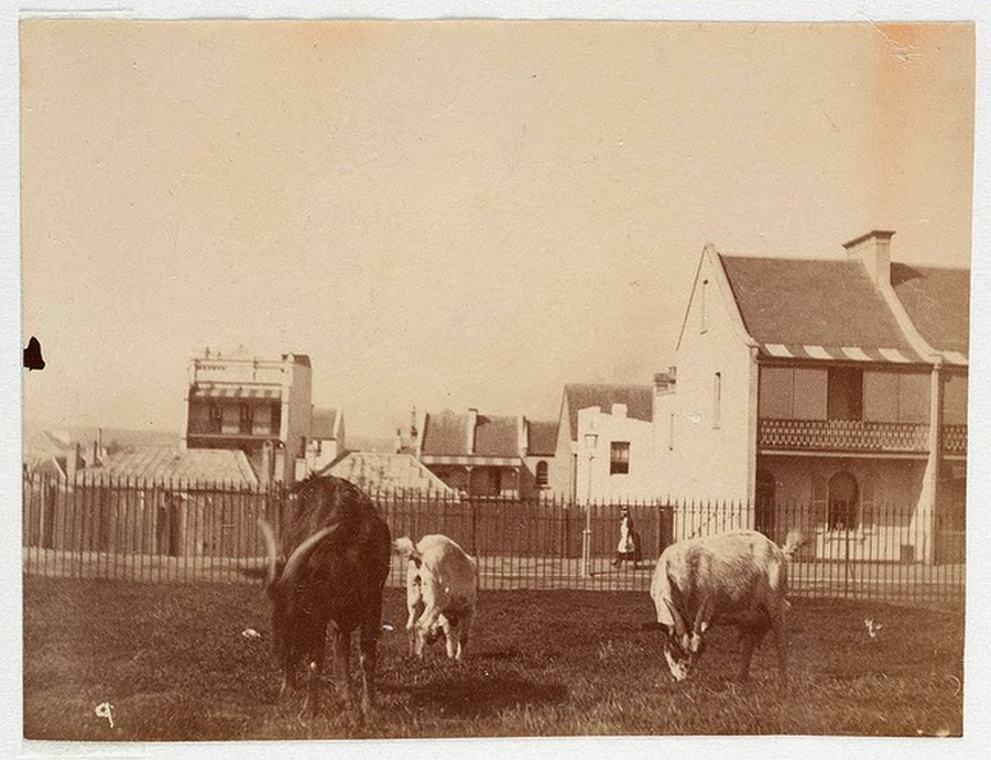 Street Scenes of Sydney, ca. 1885-1890 (17).jpg