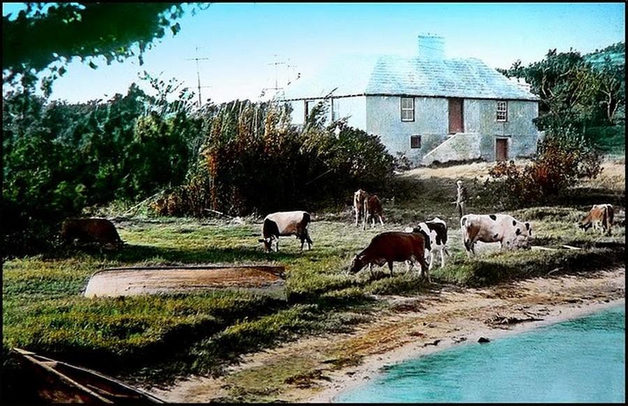 Old Bermuda in the 1930s (15).jpg