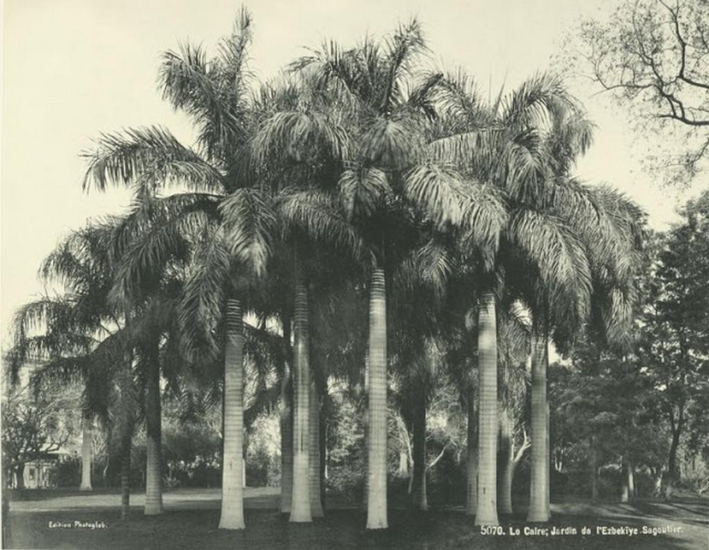 Garden of Ezbekieh [Azbakia].jpg