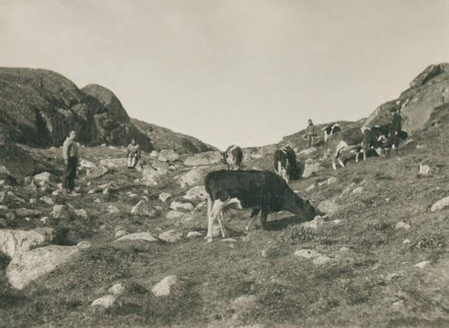 Greenland in the Late 19th to Early 20th Century (36).jpg