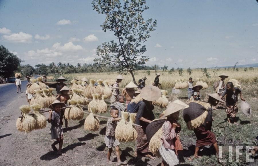 Indonesia, 1972 (7).jpg