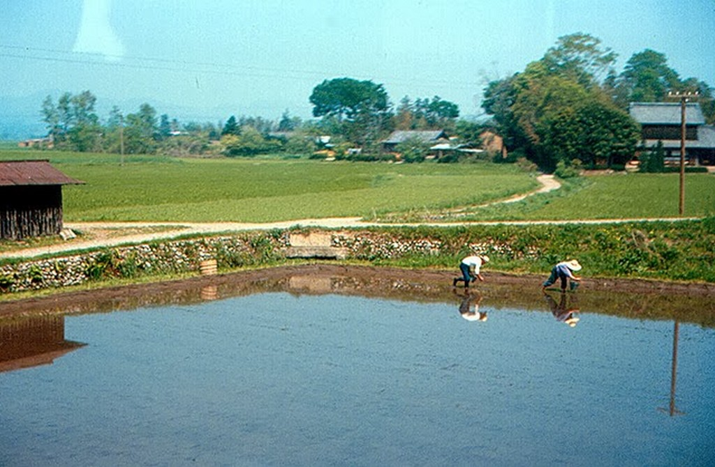 Japan in 1967 (25).jpg