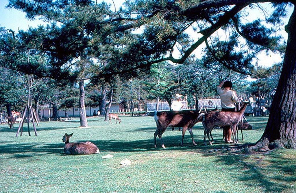 Japan in 1967 (46).jpg