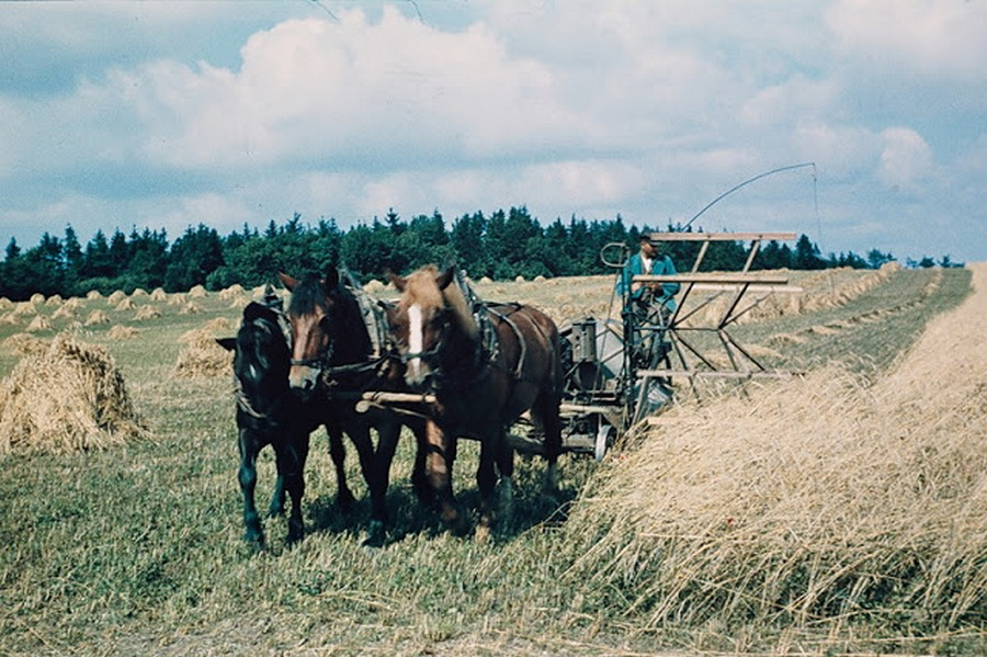 color_photos_of_the_third_reich_agriculture_in_mecklenburg_1938_2_.jpg
