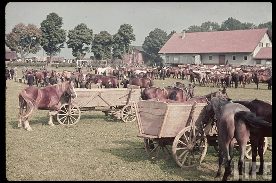color_photos_of_the_third_reich_agriculture_in_mecklenburg_1938_6_.jpg