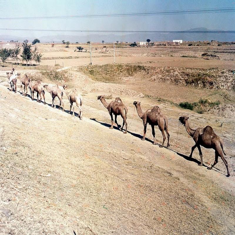 Pakistan in 1957 (10).jpg