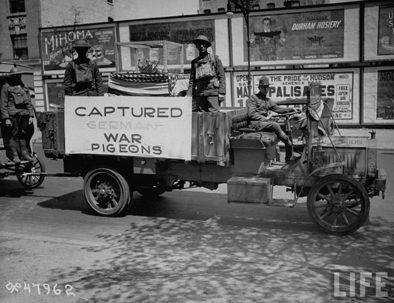 1919. Elfogott német postagalambok a new yorki győzelmi parádén..jpg