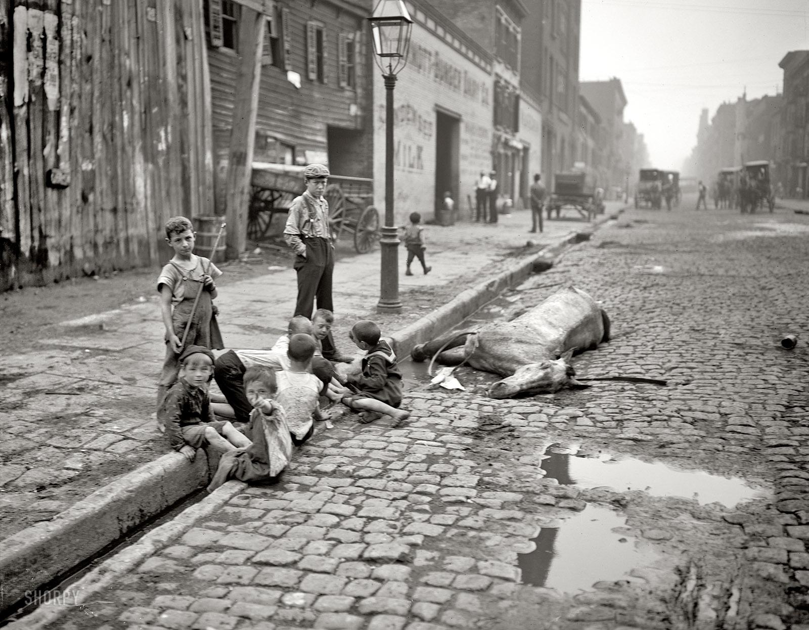 1900. New York. Szegény gyerekek egy döglött ló mellett játszanak..jpg