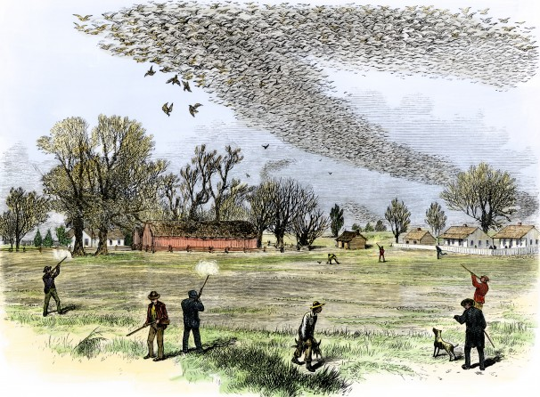 1870fametszet.jpg