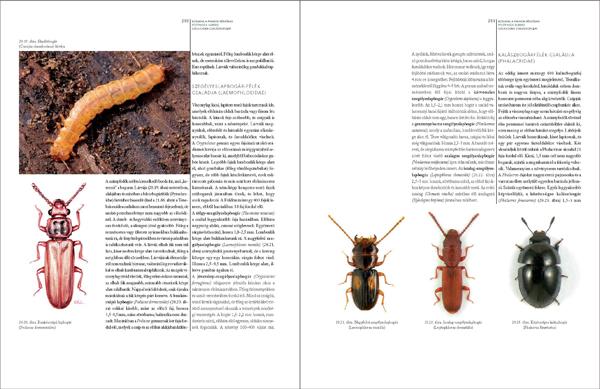 Bogaraskönyv278_467_Oldal_06_web.jpg
