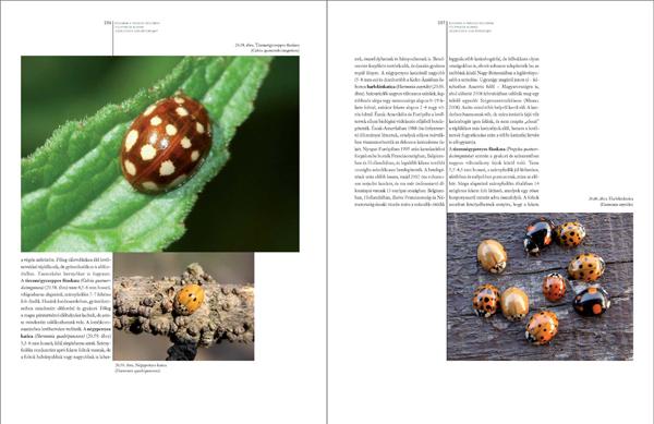 Bogaraskönyv278_467_Oldal_15_web.jpg