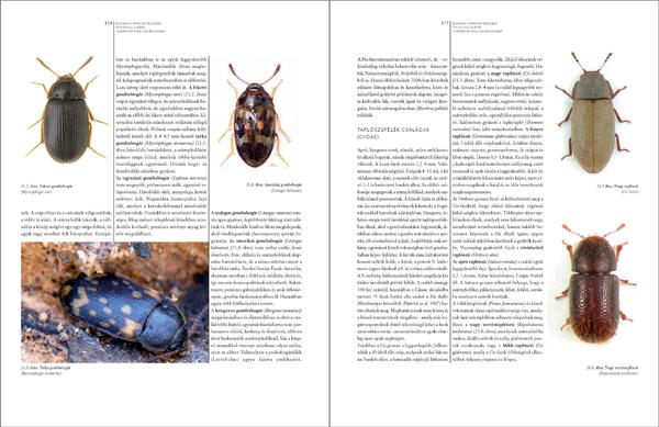 Bogaraskönyv278_467_Oldal_20_web.jpg