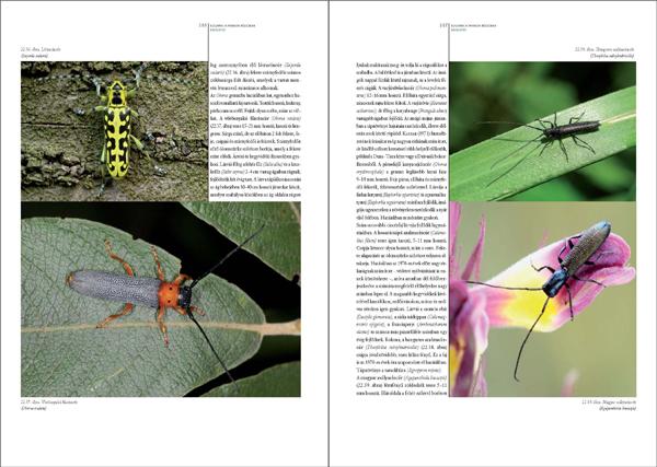 Bogaraskönyv278_467_Oldal_55_web.jpg