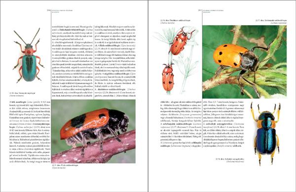 Bogaraskönyv278_467_Oldal_60_web.jpg