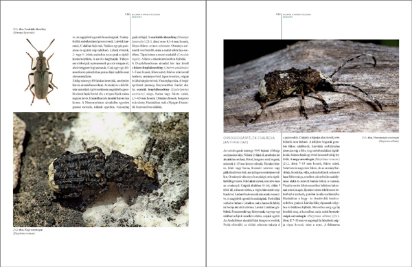 Bogaraskönyv278_467_Oldal_71_web.jpg