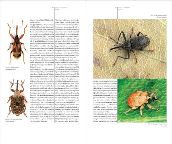 Bogaraskönyv278_467_Oldal_77_web.jpg