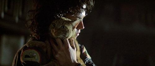 macskák Ripley_and_Jonesy.jpg