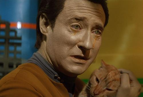 macskák Spot Data_crying.jpg