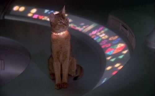 macskák cat from outer space.jpg
