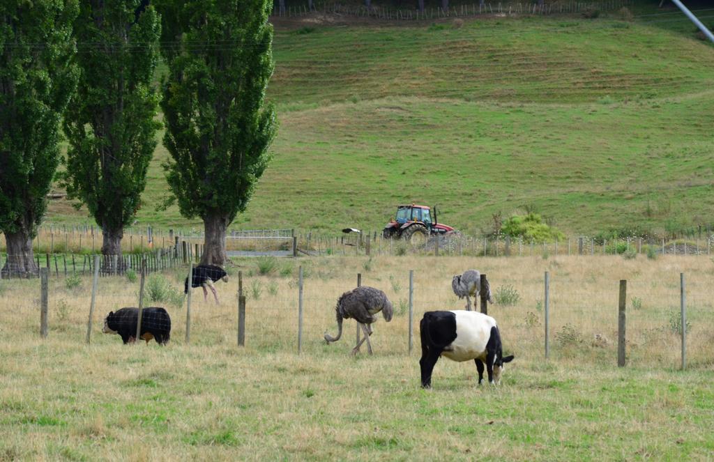 tehenek es struccok