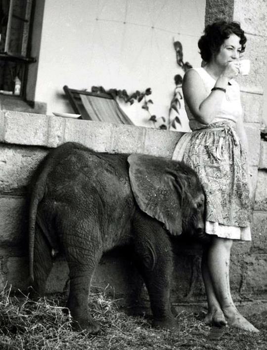 Az elefántok anyja: Daphne Sheldrick