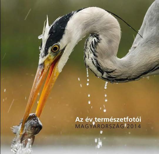 A legtehetségesebb magyar természetfotósok - jövőheti kiállítás-ajánló