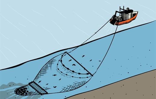 Idegenek a tenger mélyéről vs. vonóhálós halászat