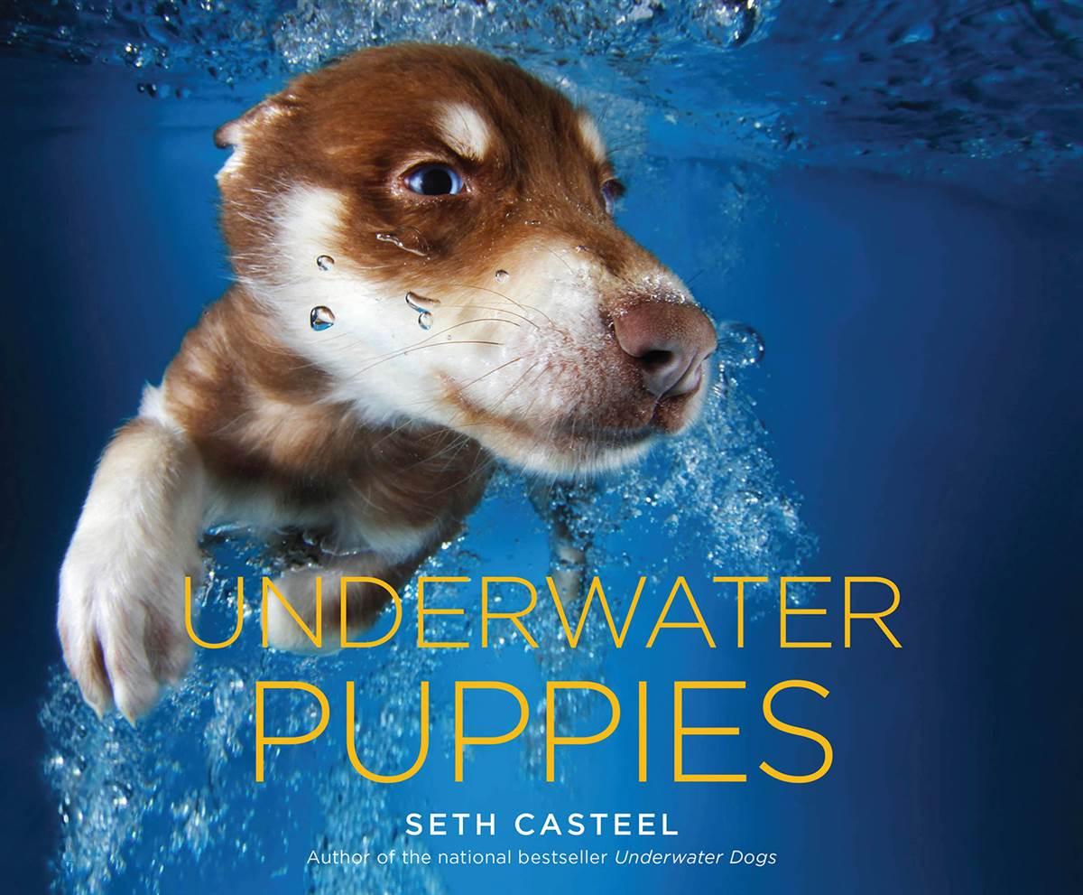 Megígértük, itt vannak: kutyakölykök víz alatt