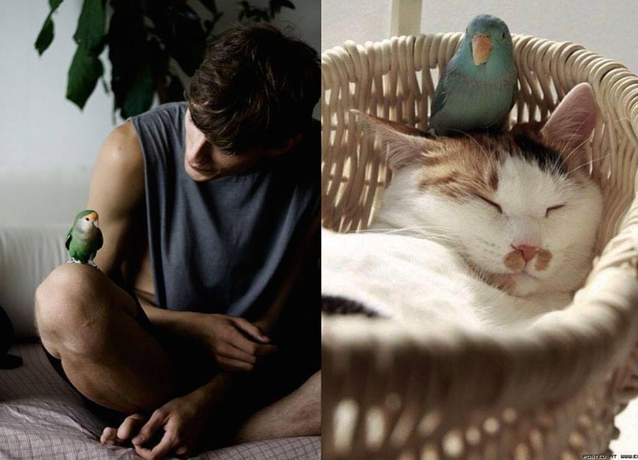 szexi-cicamicak-macsak-es_-szexi-pasik-cats-sexy-models-_15_.jpg