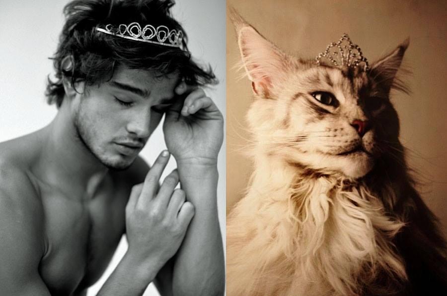szexi-cicamicak-macsak-es_-szexi-pasik-cats-sexy-models-_20_.jpg