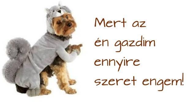 kutyakeksz_hazilag_egeszseges.jpg