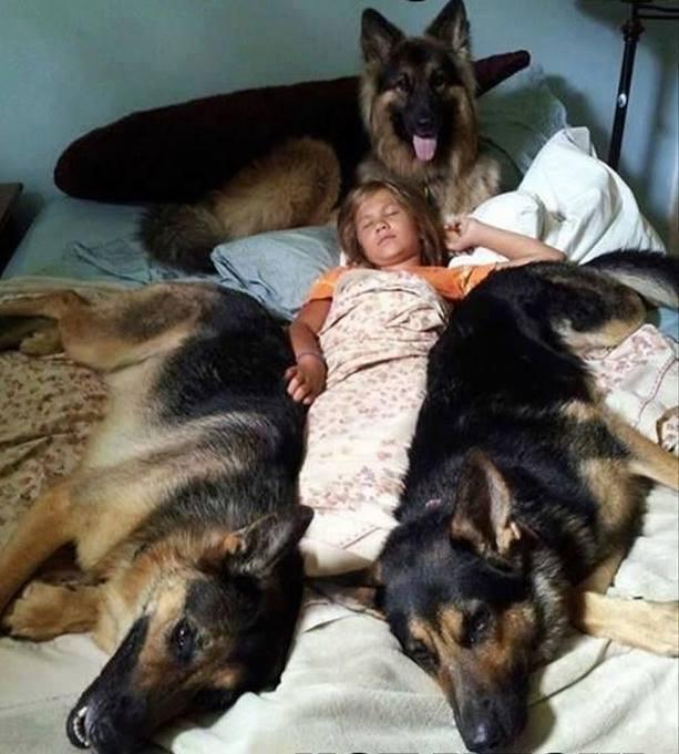 Állati jó védelem