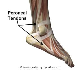 peroneal-tendons.jpg